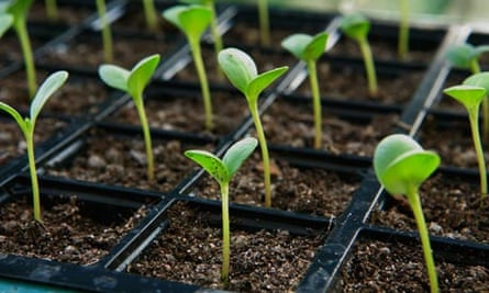 Zeolite Seedling Starting Help Product