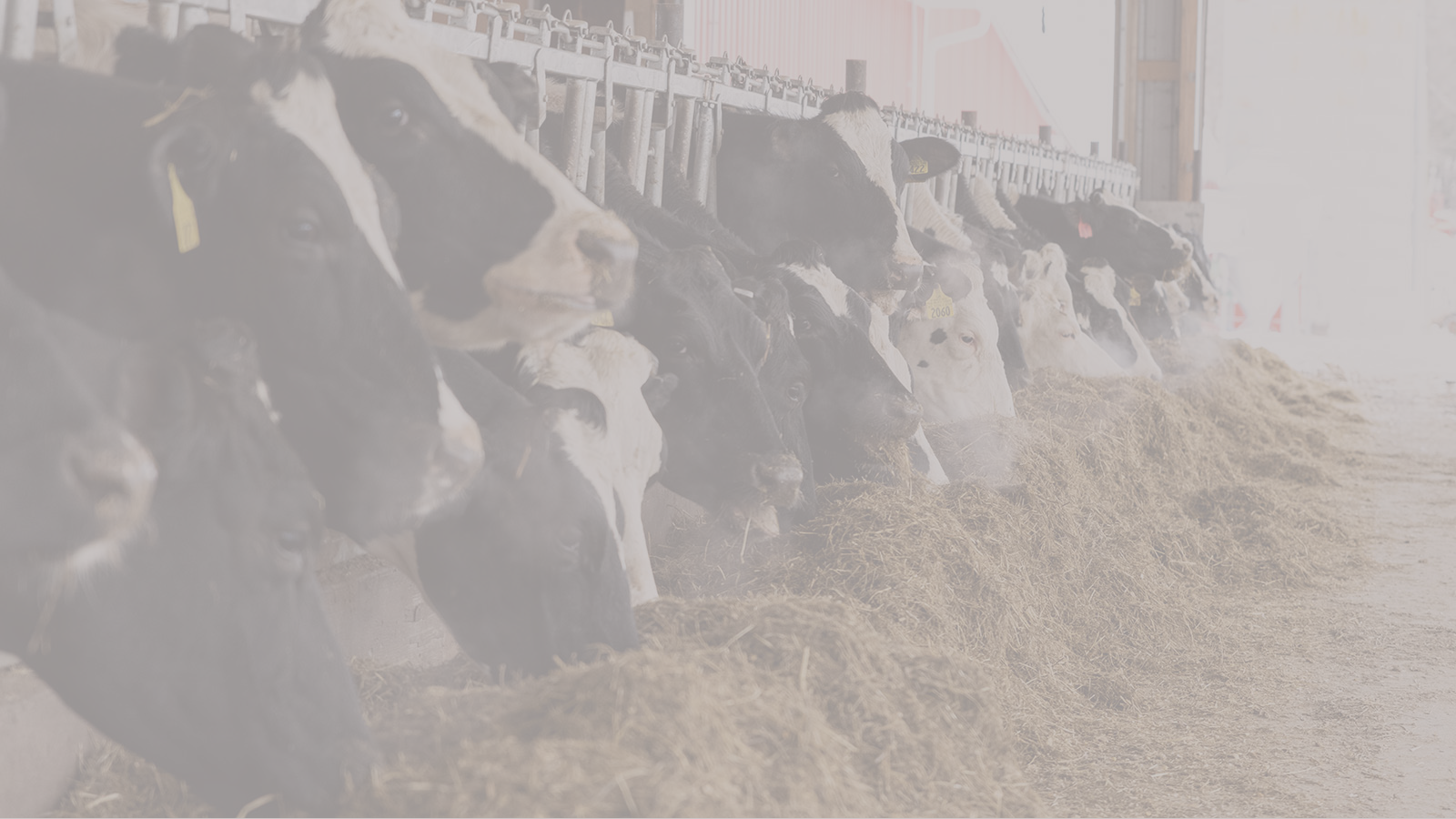 Dairy feed additive