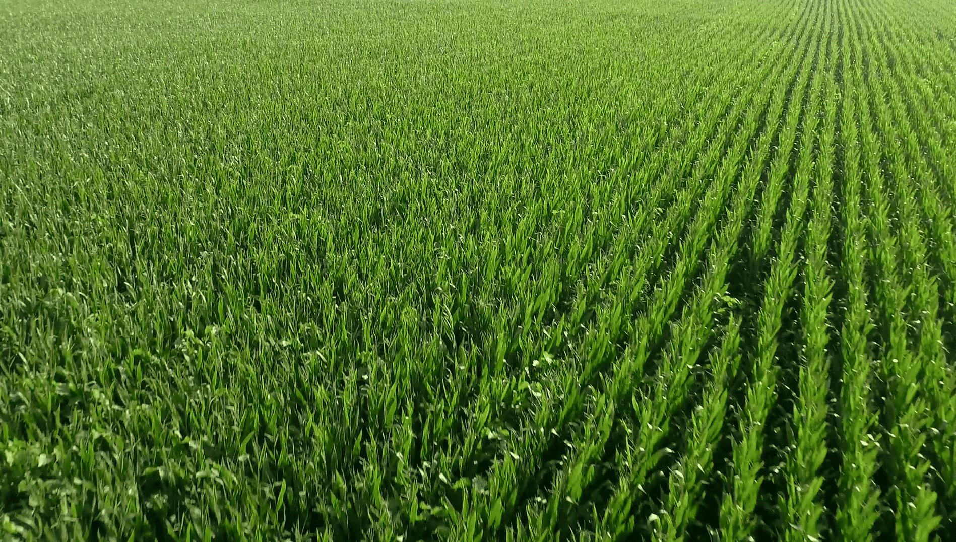 Healthy crops zeolite